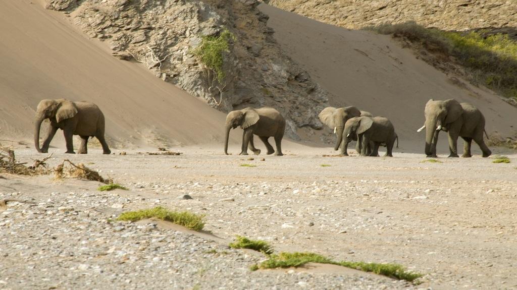 Skeleton Coast and elephants