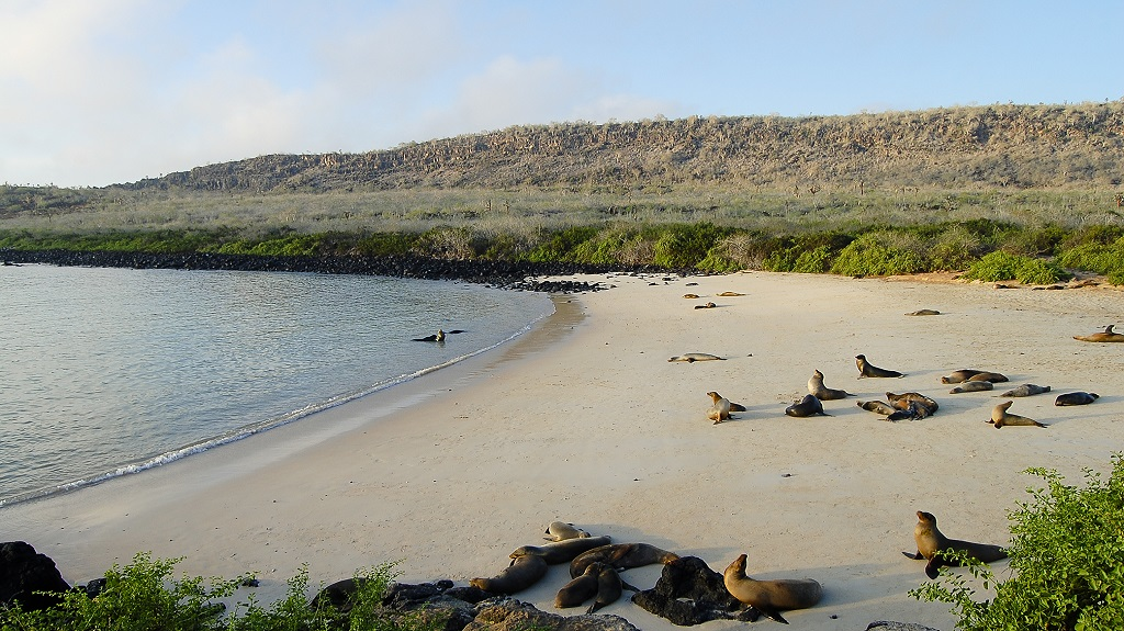 Sea Lions on Espanola Island – Galapagos