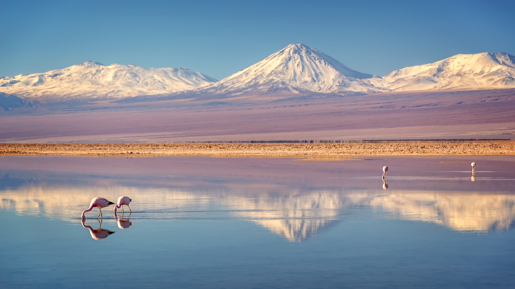 Snowy Licancabur volcano in Andes montains reflecting in the wate of Laguna Chaxa with Andean flamingos, Atacama salar, Chile