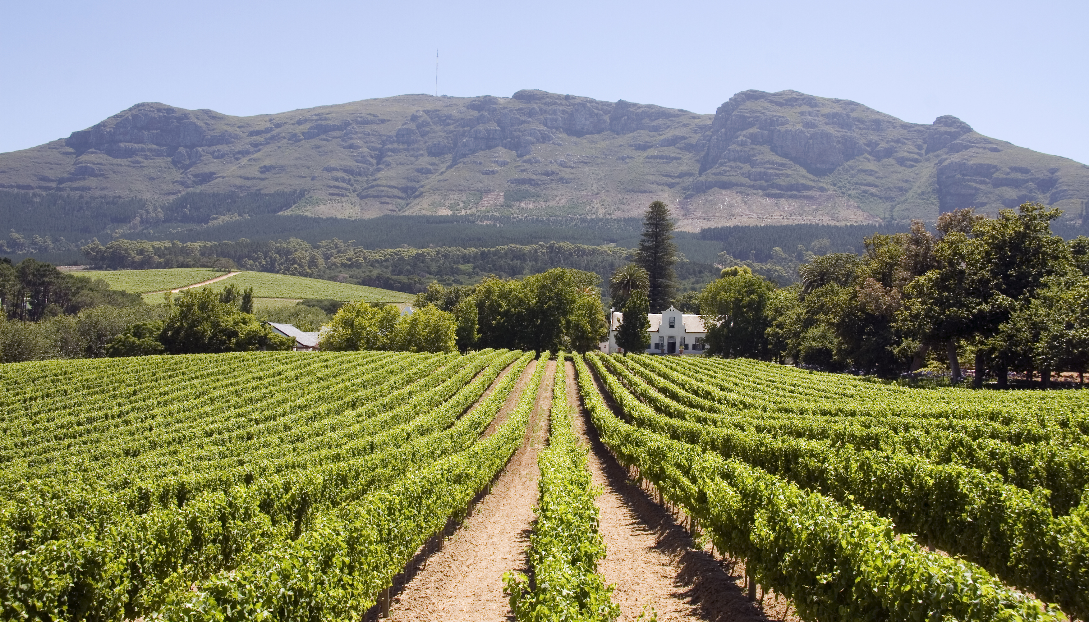 Panoramic view of a winery in South Africa