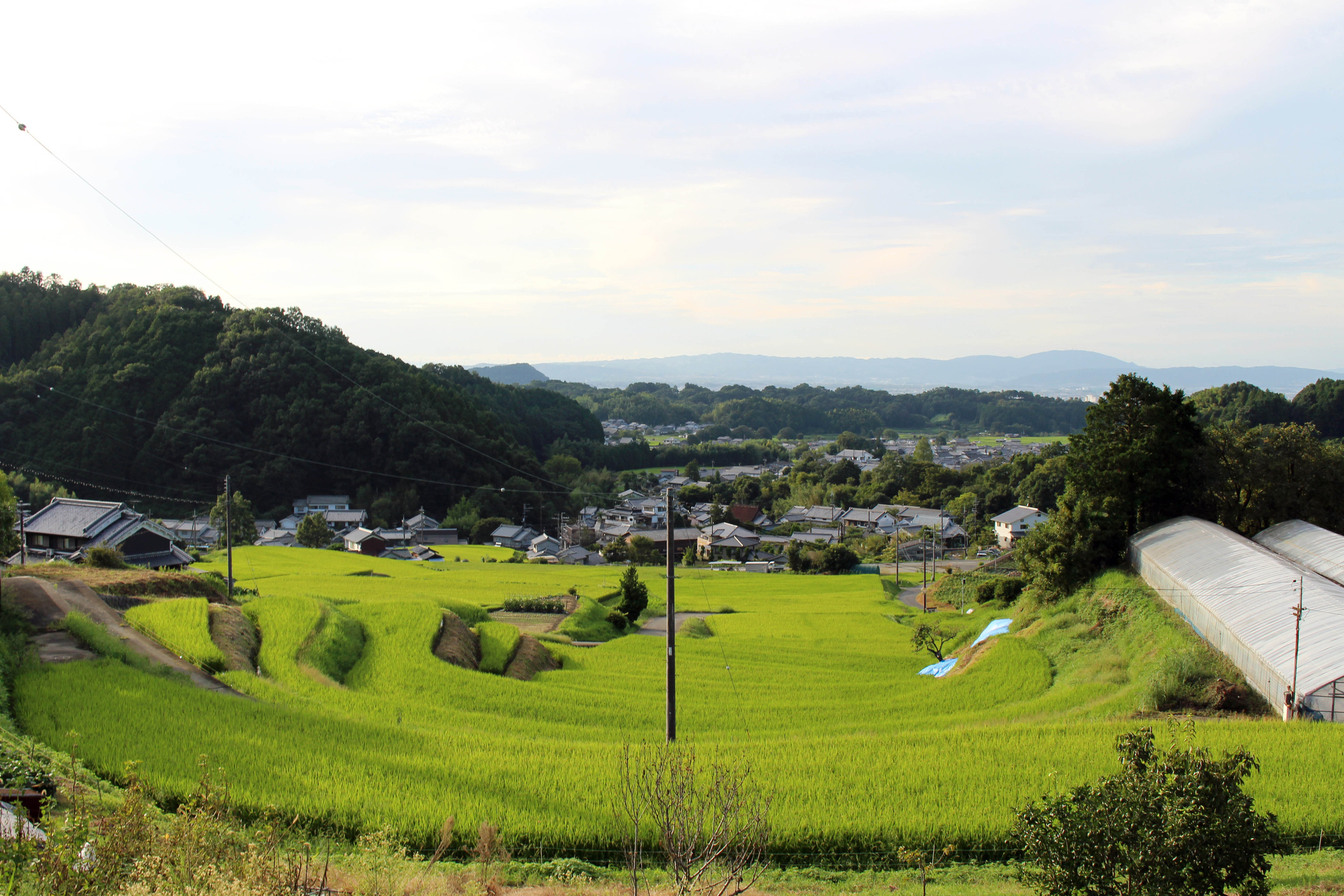 Housing complex in a village and paddy field in Asuka