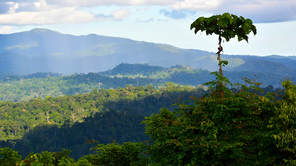 Tropical rainforest scenery in Danum Valley, Sabah Borneo