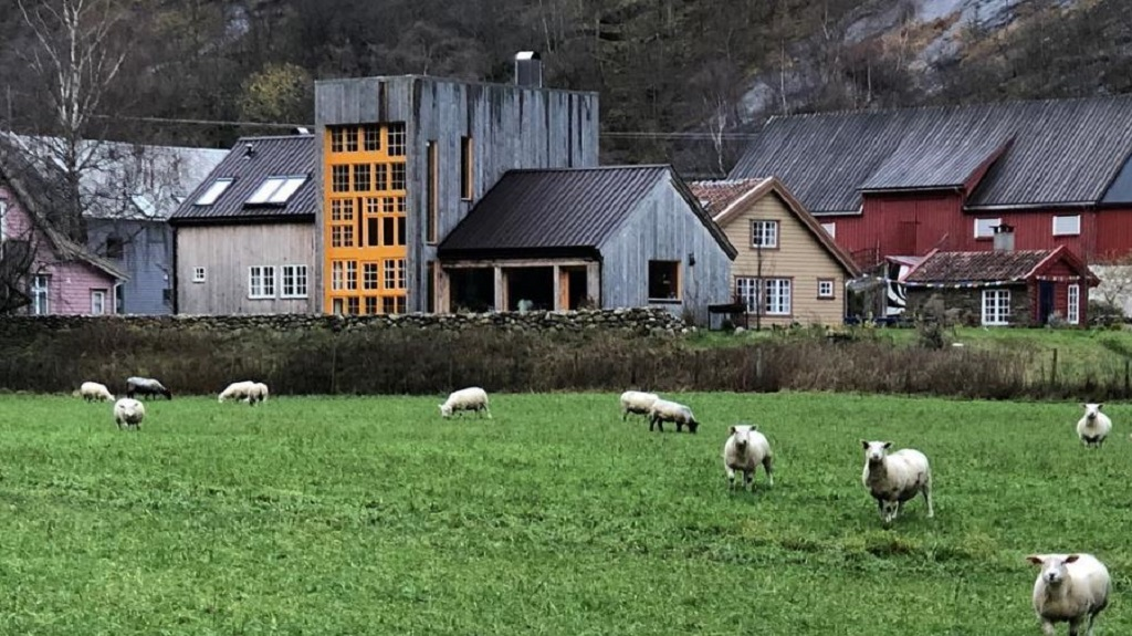 goats-at-the-292-aurland