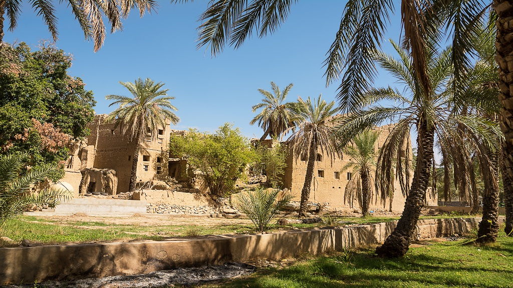Old mud houses and palm tree in the old village of Al Hamra (Oman)