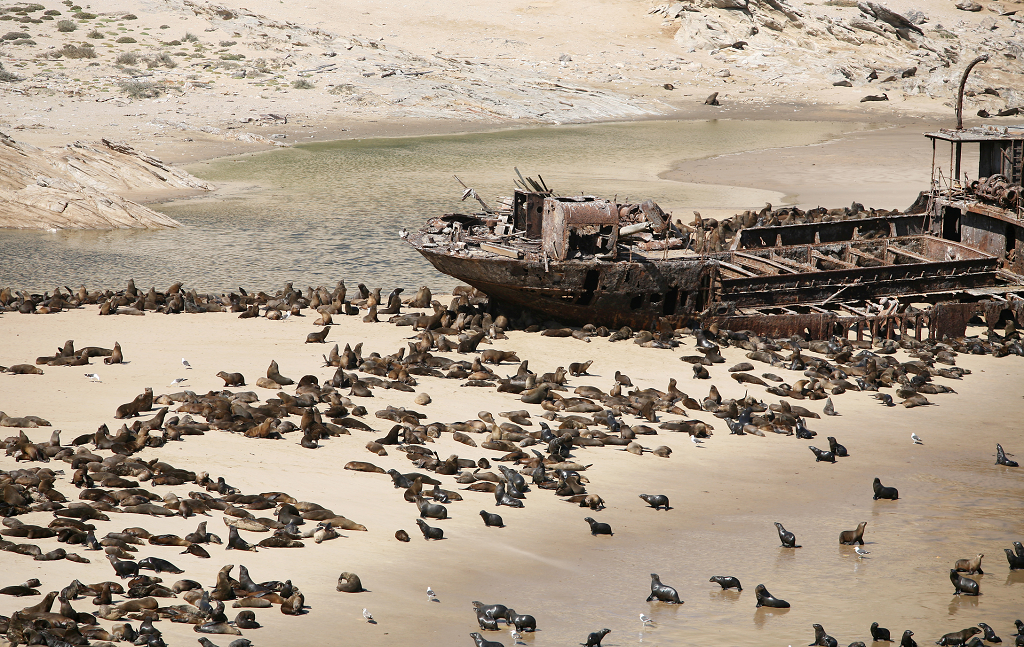 seal_colony_namibia