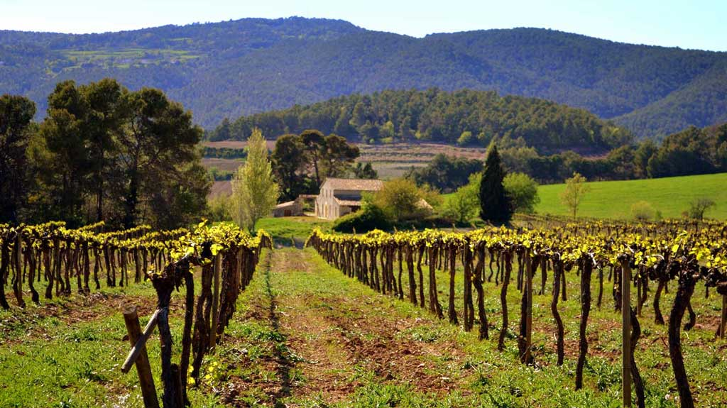 spain-day-4-penedes-catalonia