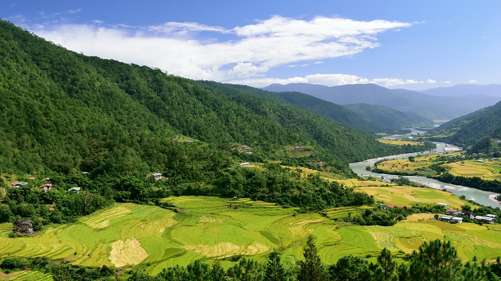 Terraced paddy fields in the Punakha valley, Bhutan